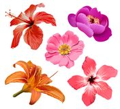 Flowers vector set royalty free illustration