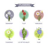 Flowers vector set isolated on white background. Illustration in flat style design. Icons and emblems Royalty Free Stock Images