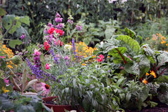 Flowers and vegetable garden bed. Garden bed with mixture of vegetable and flowers plants Royalty Free Stock Image