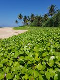 Flowers and vegetation on the beach stock photography