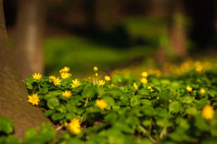 Flowers and vegetation in summer park on background of trees Royalty Free Stock Photos