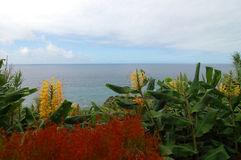 Flowers ver the coast of the Azores Stock Photography