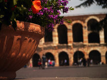 Flowers in Verona Stock Image