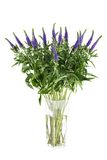 Flowers Veronica