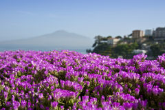 Flowers and Vesuvius on a background. The view of Mount Vesuvius on a horizon with bright flowers in a foreground in Vico Equense, Italy Royalty Free Stock Photos