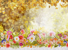 flowers view of autumn leaves and White wooden terrace Stock Photos