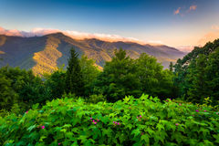Flowers and view of the Blue RIdge at sunrise, seen from Mt. Mit Royalty Free Stock Images