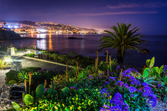 Flowers and view of Laguna Beach at night  Stock Image