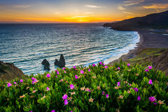 Flowers and view of Rodeo Beach at sunset stock photography
