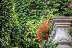 Flowers of Villa Carlotta on Lake Como Royalty Free Stock Image
