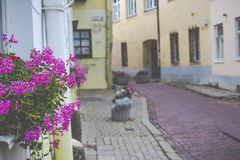 Flowers in Vilnius city in old town Lithuania. Royalty Free Stock Photo