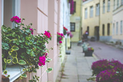 Flowers in Vilnius city in old town Lithuania. Royalty Free Stock Photos