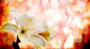 Flowers on a vintage  background Royalty Free Stock Photography