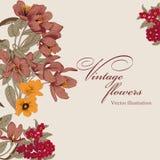 Flowers. Vintage postcard. Vector illustration. Flowers. Vintage vector illustration. Classic card. Botany Stock Photos