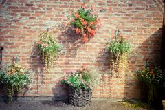 Flowers. The vintage wall with flowers Royalty Free Stock Image