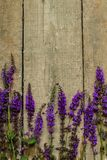 Flowers on vintage wood background royalty free stock images