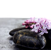 Flowers violet lilac on spa stones in water droplets. Closeup image, wet surface, selective focus Royalty Free Stock Photo