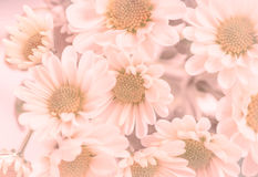 Flowers in violet tone Stock Images