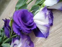 Flowers purple with white royalty free stock photos