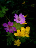 Flowers. Violet and yellow small flowers and leaves on dark background Stock Photo