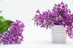 Flowers violets in a small bucket  over white Royalty Free Stock Image