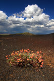 Flowers in Volcanic Landscape Stock Photo