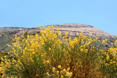 Flowers by the volcano. Stock Photography