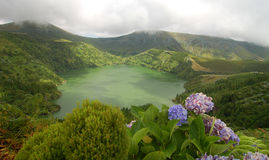Flowers on the volcano. In azores, Fayal, portugal Royalty Free Stock Photos