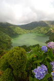 Flowers on the volcano. In azores, Fayal, portugal Royalty Free Stock Images