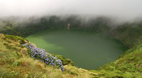 Flowers on the volcano. In azores, Fayal, portugal Stock Image