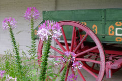Flowers and Wagon Wheel Stock Photography