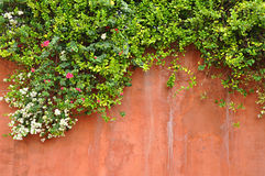 Flowers on the wall. Flowers on retro concrete wall Royalty Free Stock Photo
