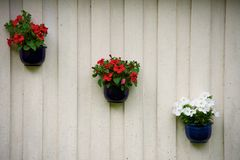 Flowers on a wall Royalty Free Stock Photography