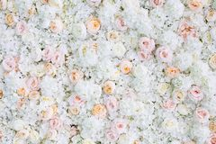 Free Flowers Wall Background With White And Light Orange Roses Stock Images - 150755834