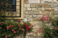 Flowers in a wall. Beautiful flowers on a brick wall Royalty Free Stock Image