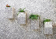 Flowers on the wall. The flowers bloom in the flowerpot on the wall Stock Image