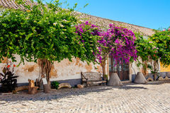 Flowers on the wall, Faro Portugal. Purple and pink flowers growing on the wall in Faro, Portugal stock photo
