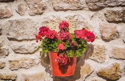 Flowers on the wall. A flower pot on the wall Stock Photo