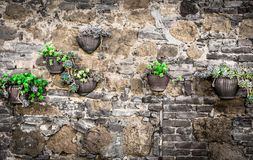 Flowers on a wall Royalty Free Stock Image