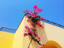 Flowers on the wall. Hot summer. Relaxation Egypt . Africa Stock Image