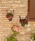Flowers on the wall Royalty Free Stock Image