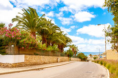 Flowers on the wall, Lagos Portugal Royalty Free Stock Photo