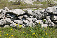 Flowers at the wall. Old wall made of stones and some blooming daffodils and dandelions next to it Royalty Free Stock Photography