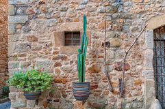 Flowers on the wall, Peratallada, Spain Royalty Free Stock Images