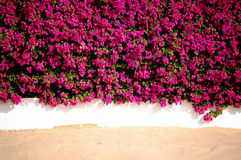 Flowers wall sand. Beautiful flowers white wall and sand make a composition Royalty Free Stock Images