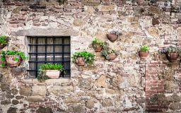 Flowers on a wall. Somewhere in Tuscany Royalty Free Stock Image