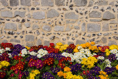Flowers and wall Stock Photo