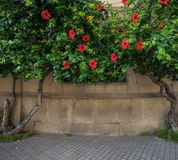 Flowers on wall Royalty Free Stock Photo