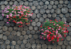 Flowers on the wall Stock Image