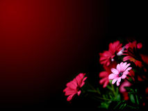 Flowers wallpaper. Red and pink daisy flowers wallpaper vector illustration